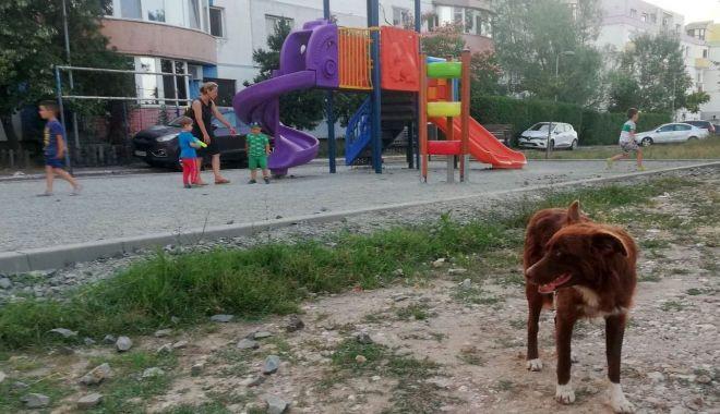 """Foto: Locurile de joacă, sub asediul maidanezilor, în Poarta 6! """"Ne temem pentru siguranța copiilor!"""""""