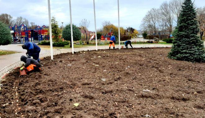 Mii de bulbi de lalele, plantaţi în Ţara Piticilor - miidebulbi-1607714183.jpg