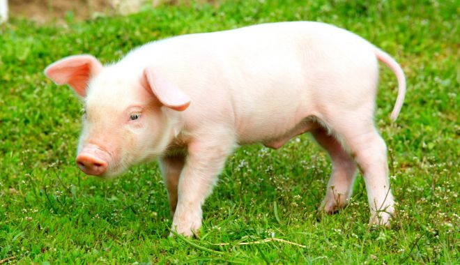 Limitarea numărului de porci la cinci, o măsură dură, dar necesară - ministrulagriculturii-1612546906.jpg