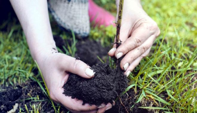 Foto: Mobilizatron - Ajutăm România să respire. 4.800 de puieți plantați, în week-end, la Eforie Nord