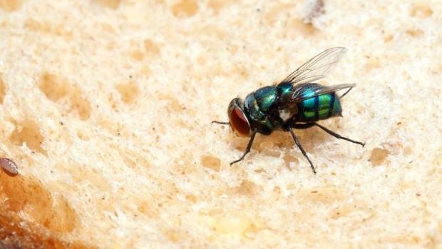 Descoperire uluitoare despre muște - muste02500800-1511633611.jpg