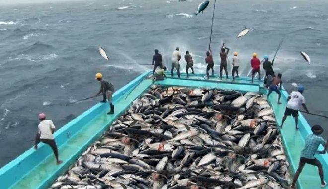 Noi cote de pescuit în Marea Mediterană și Marea Neagră, pentru anul 2022 - noicotedepescuitinmareamediteran-1632158809.jpg