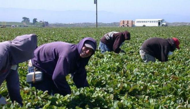 Foto: Guvernul a reglementat reducerea timpului de muncă și adordarea indemnizațiilo pentru zilieri și sezonieri