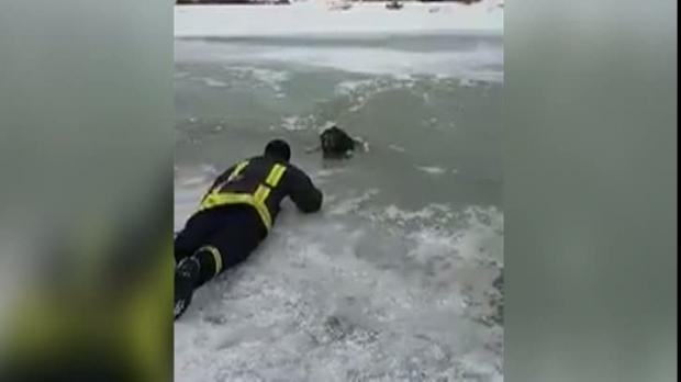 VIDEO / Operațiune emoționantă de salvare. Un câine a fost scos dintre sloiuri de un pompier - operatiunisalvare08814200-1486026860.jpg