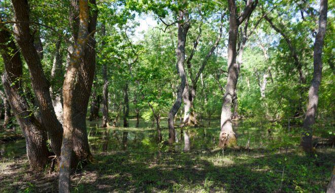 De astăzi, taxa de vizitare a Pădurii Letea poate fi plătită prin sms - padure-1562951060.jpg