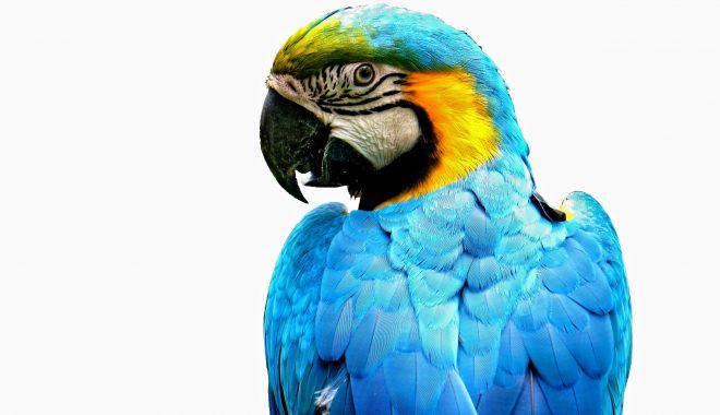 Papagalul vorbește mai multe limbi! - papagalul-1585320546.jpg