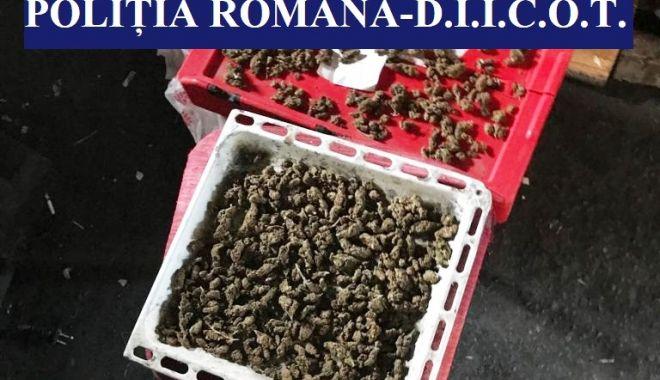 Foto: Percheziții în Techirghiol și Eforie, la o grupare de traficanți de droguri și de carne vie