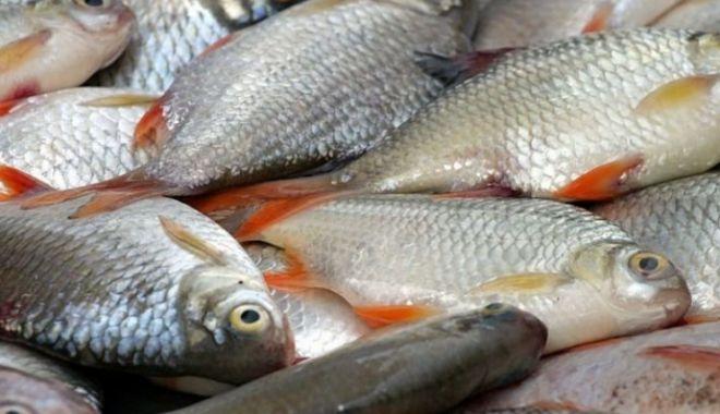 Cercetătorii gălățeni vor să distrugă virusul Covid-19 cu ajutorul solzilor de pește - peste-1605953377.jpg