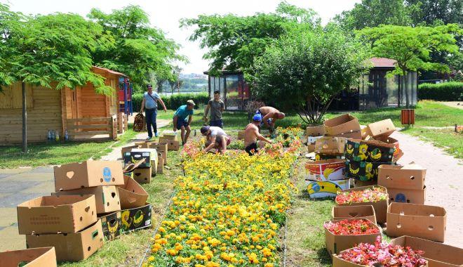 Peste 30 de mii de flori plantate în Parcul Tăbăcăriei - peste30demii-1560200078.jpg