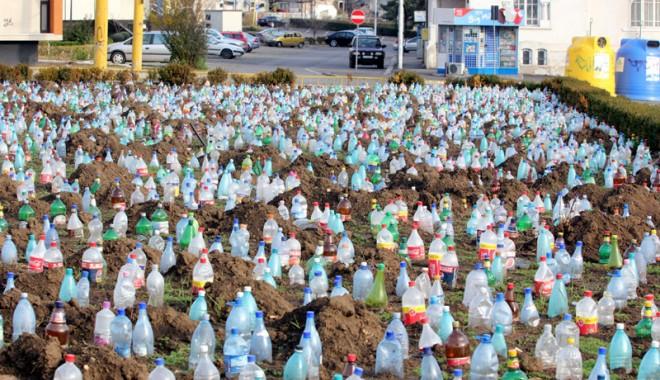 Ce a plantat Primăria în centrul Constanței - peturiconstanta14-1325000966.jpg