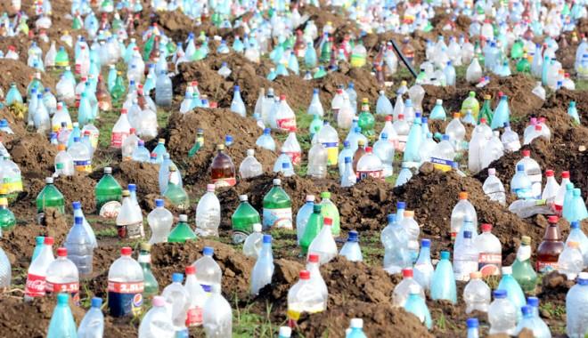 Ce a plantat Primăria în centrul Constanței - peturiconstanta9-1325001003.jpg