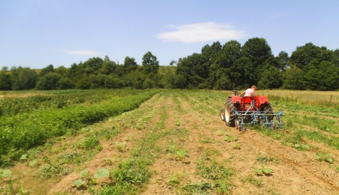 Piața terenurilor agricole mustește de oferte. Iată prețurile cerute de vânzători! - piataterenuriloragricolemusteste-1596987756.jpg
