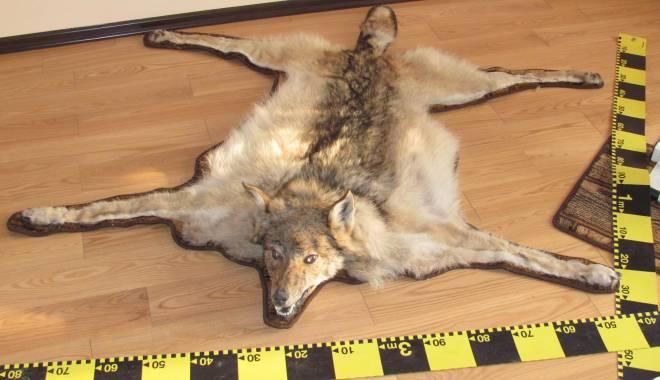 Foto: Galerie foto. Captura polițiștilor din Constanța: piei de lupi și capete de căpriori