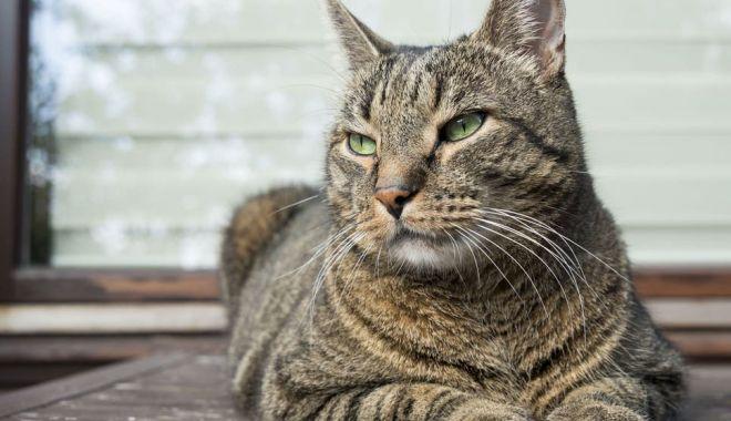 Primul caz de animal infectat cu Covid-19. Ce simptome are - pisica2-1595860589.jpg