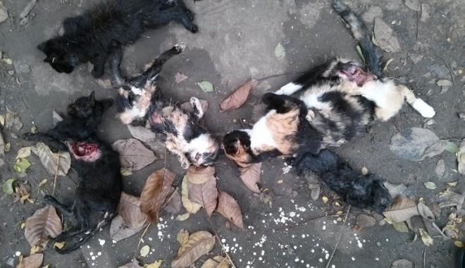 MASACRU în zona Abator: animale spintecate și cu organele scoase! - pisicimoarte2-1382707747.jpg