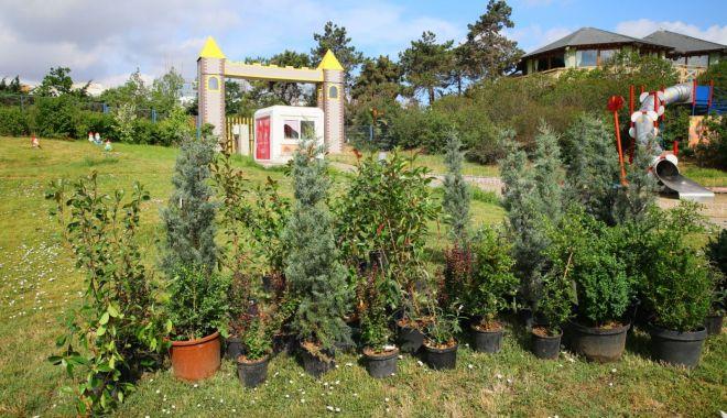 Încep plantările de toamnă în Țara Piticilor - plantaretarapiticilor2-1601467126.jpg