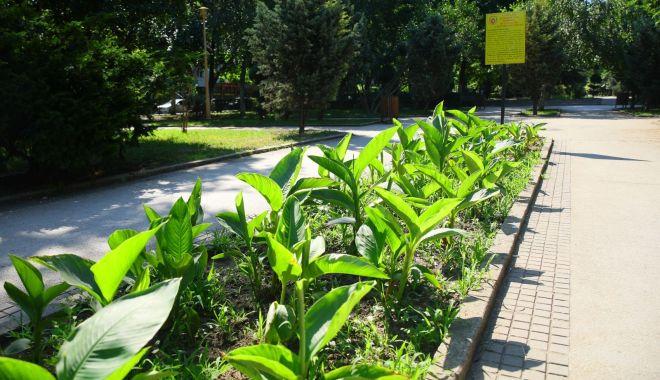 Foto: Spațiile verzi din oraș, în atenția administrației locale