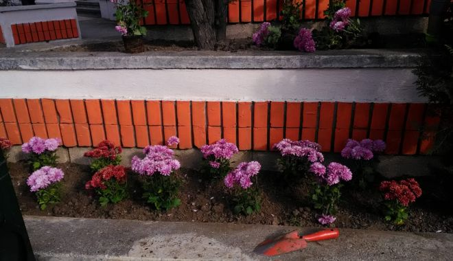 Foto: Primăria Constanța continuă plantările de toamnă