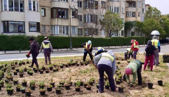 Plantări de primăvară, la Constanța - plantarideprimavara-1589478547.jpg