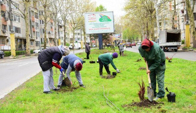 Plantări de toamnă, la Constanţa - plantaridetoamna-1606299812.jpg