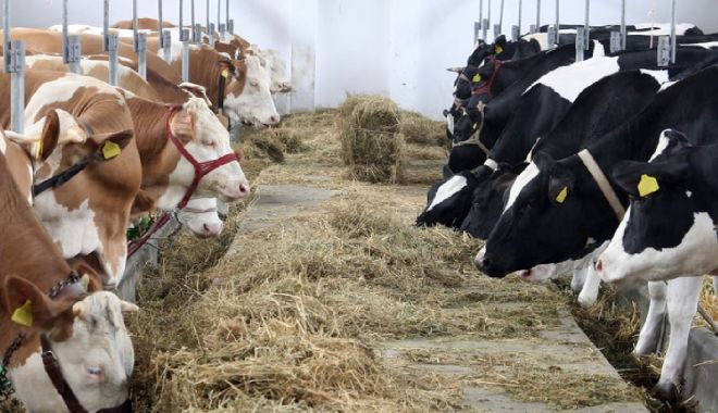 Foto: Plata ajutorului de stat pentru ameliorarea raselor de animale