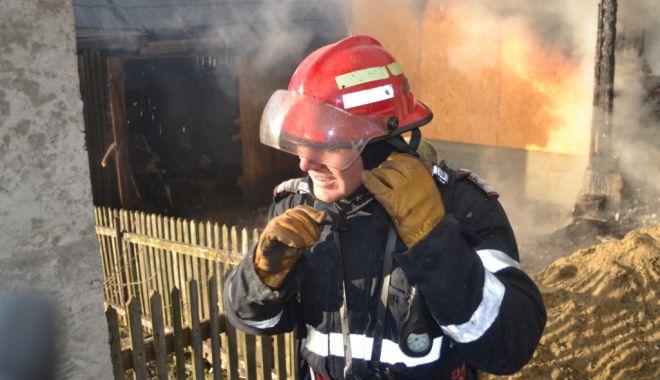Foto: ARD ALBINE LA CONSTANȚA! Lichidarea focului, dificilă din cauza insectelor agitate