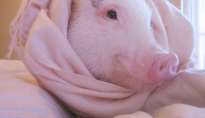 """Foto: """"Povestea porcului"""" se joacă  în Țara Piticilor"""