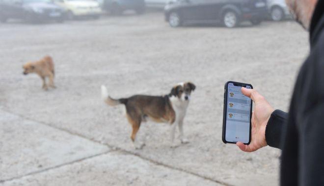 Premieră la Constanţa. Începe recensământul câinilor fără stăpân - premiera-1614845396.jpg