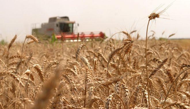 Preţul grâului a explodat pe bursele internaţionale - pretulgraului-1614797474.jpg