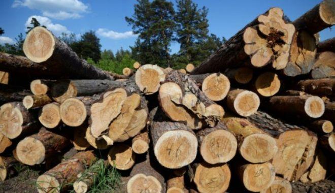 Ministerul Mediului anunță un nou sistem de urmărire a lemnului tăiat - primaruluneicomunedinargesprinsl-1612016720.jpg