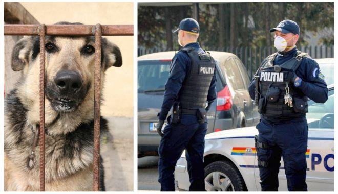 Foto: Poliția Animalelor, între promisiuni și realitate. Ce se așteaptă de la viitoarea structură