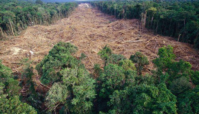 Foto: Pandemia accelerează distrugerea pădurilor tropicale