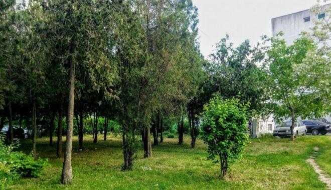 Regulamentul spaţiilor verzi din Constanţa, în dezbatere publică - regulamentul-1610390823.jpg