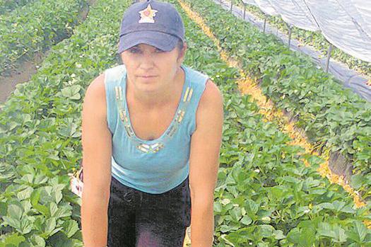 Joburi în străinătate. Se caută muncitori în agricultură - secauta-1557766417.jpg