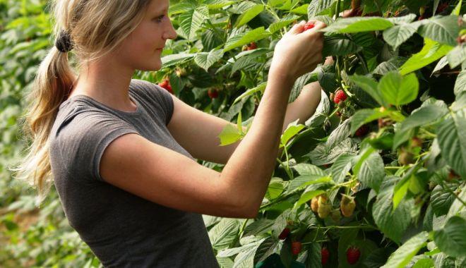 Foto: Se caută lucrători pentru agricultura din Spania