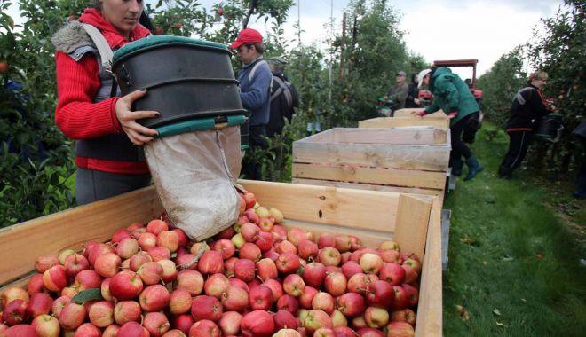 Se caută culegători de fructe pentru Olanda - secautaculegatori-1563997493.jpg
