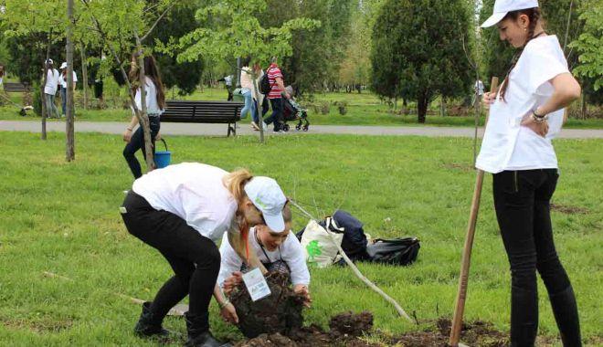 """Foto: Plantare de copaci în parcul Universității """"Ovidius"""""""