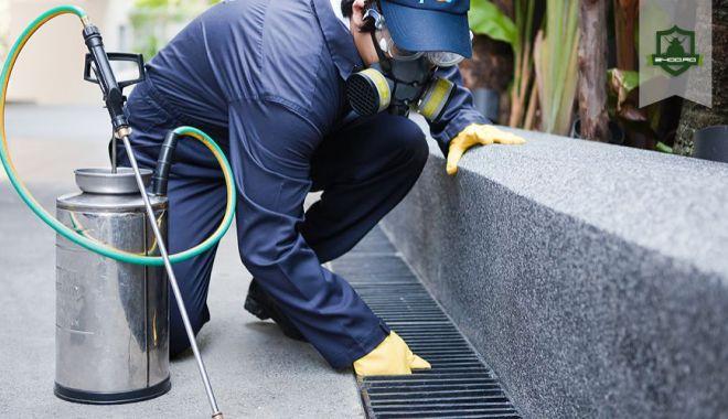 Primaria Constanța începe lucrările de deratizare - serviciideratizare-1554457256.jpg