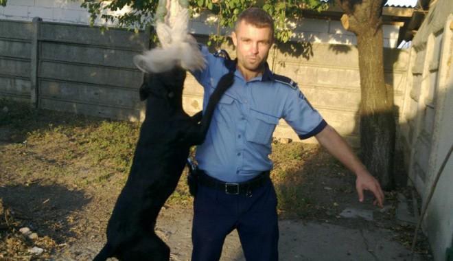 DE NECREZUT: Polițistul care prinde hoți călare și însoțit de un pitbull - sirburobertsibebebaraganu-1359399591.jpg