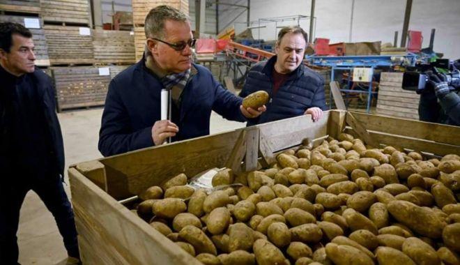 Dispare cartoful românesc? Cultivatorii au redus drastic suprafeţele - sus-1614103769.jpg