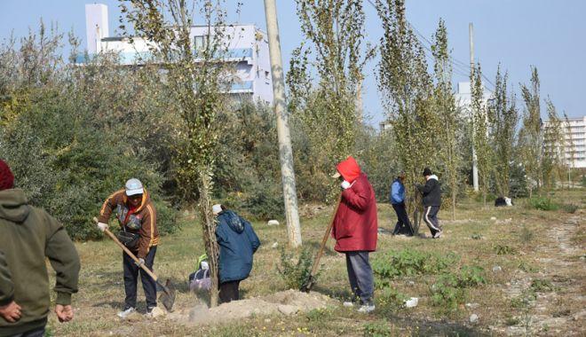 """Foto: Mii de flori plantate în campania """"Curățăm  Constanța noastră"""""""
