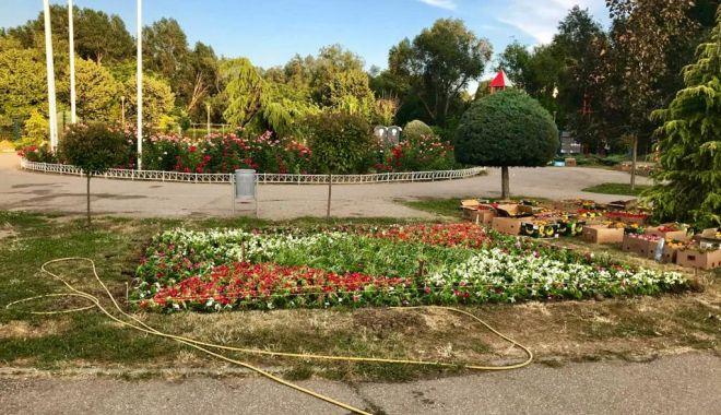 """Foto: """"Țara Piticilor"""", colorată cu peste 30.000 de flori"""