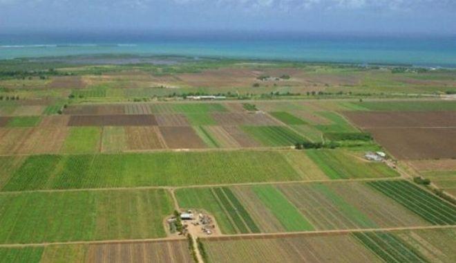 Ce terenuri s-au mai vândut în noiembrie - terenuriagricole-1605292017.jpg
