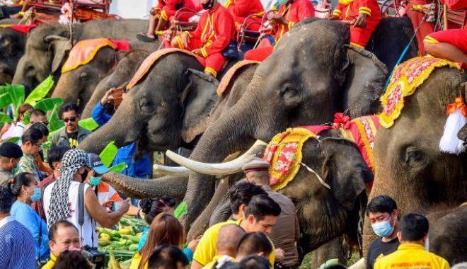 REUTERS: Ziua Elefantului, celebrată în speranţa revenirii turiştilor în Thailanda - thailandaelefanti640x400-1615642080.jpg
