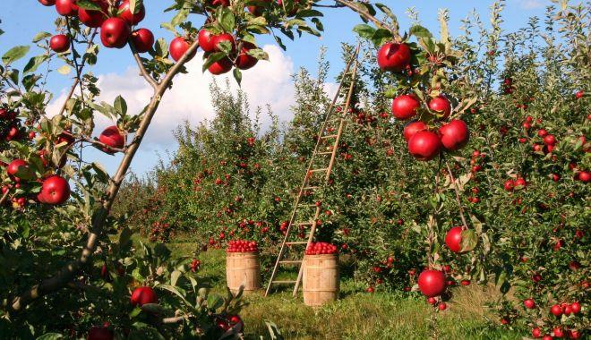 Tinerii din diaspora care vor să facă afaceri în agricultură vor fi sprijiniţi - tineriidindiaspora-1610564064.jpg