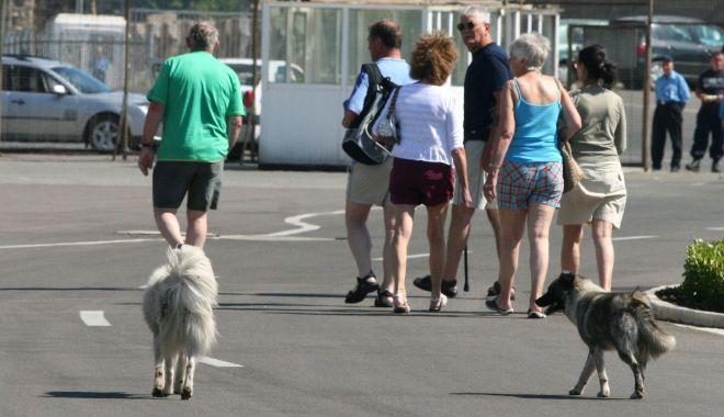 """Foto: Ultimatum pentru primărie: """"Dacă până luni nu strângeți câinii vagabonzi din stațiuni, nu mai plătim taxele locale!"""""""