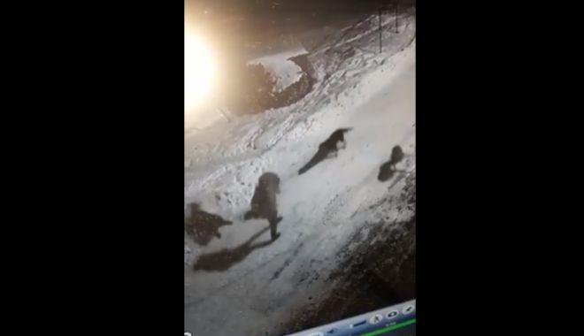Foto: ATENȚIE, SCENE TERIBILE! Femeie atacată de câini în fața blocului - VIDEO