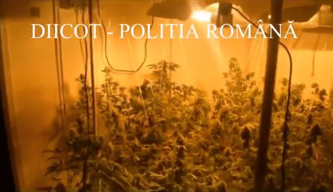 Foto: VIDEO. Creștea cannabis în apartament, la Constanța