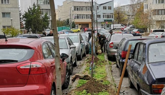 Foto: Sute de arbori, plantați la Constanța!