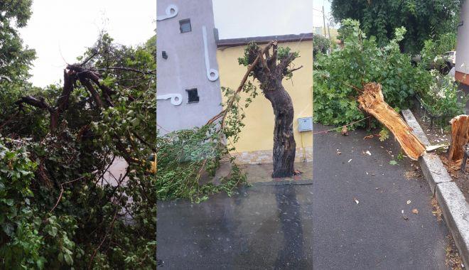 Ploaia face ravagii la Constanța. Copaci căzuți și inundații în tot județul - untitled-1594140484.jpg